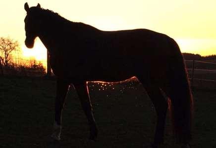 Pferd_im_Sonnernuntergang
