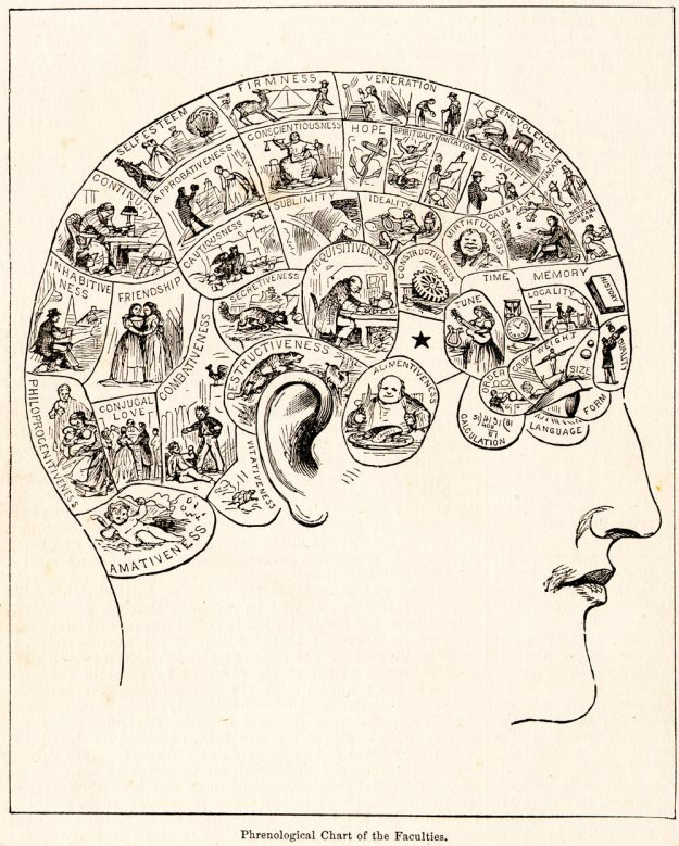 "I love the ""technical, scientific"" terms on this phrenology chart. I think my fave is ""ALIMENTIVENESS."""