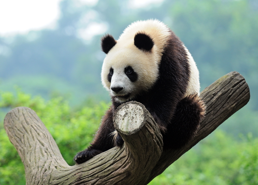 Funny Hd Animal Wallpapers Minor Panda Update Rolls Out Fewer Than 0 7 Percent Of