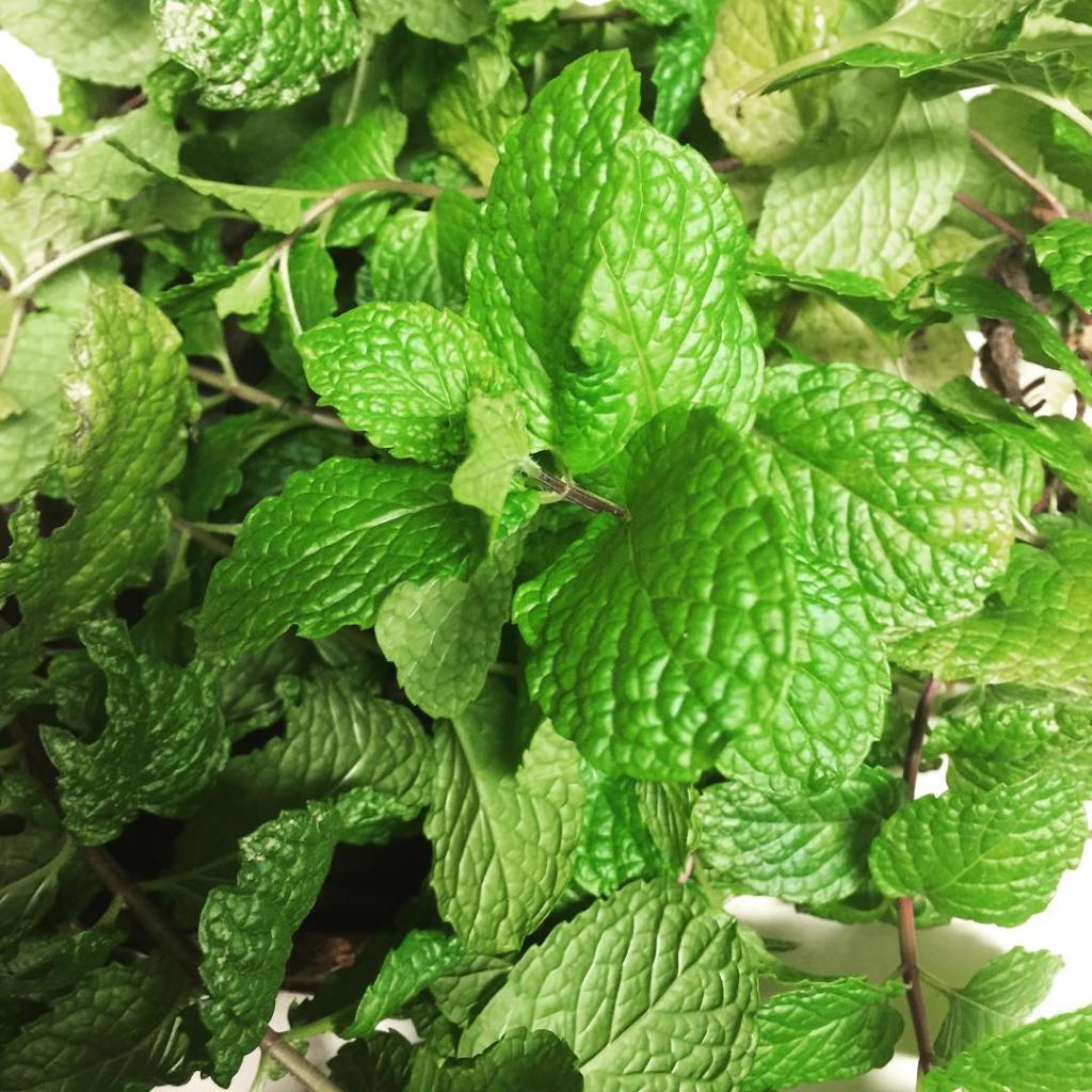Fresh mint from the Arte Crafts garden Yum herbs minthellip