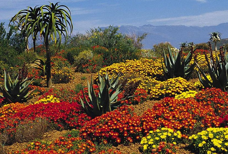 The Cape Floral Region