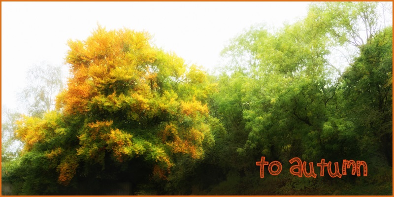 to autumn