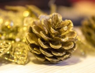 pine-cone-1104333_1920