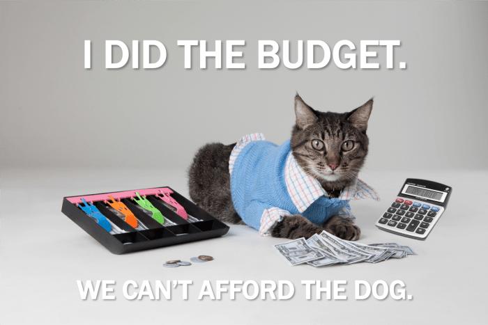 cat budget