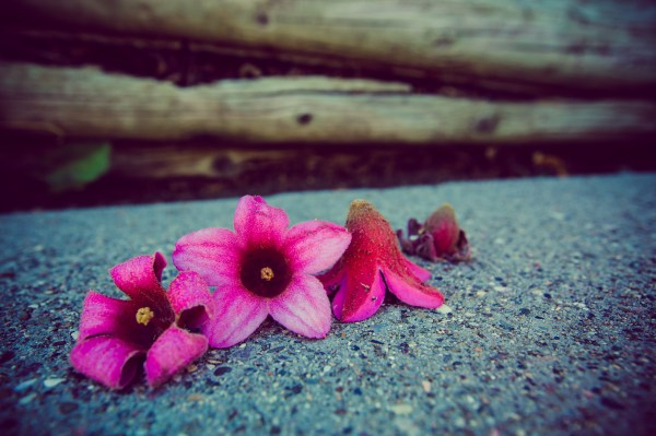 flowers on sidewalk