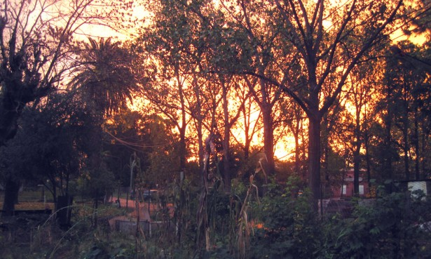 Sunset at School of Agriculture, Buenos Aires