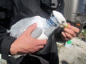 Florida Keys Wildlife Rescue