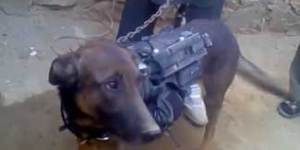 Nothing will ever make you angrier than seeing Taliban soldiers who kidnapped a US military dog
