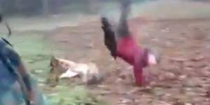 Amazing dog recreates the Jadeveon Clowney hit on Vincent Smith