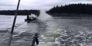 Alaskan killer whale pimp slaps sea lion 20ft in the air