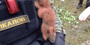 Red squirrel chasing Russian military in circles is a shining symbol of Capitalism