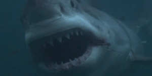 Shark Week debunked: These are the dangerous lies Shark Week is feeding you