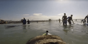Thanks To The Miracle Of GoPro You Can Now Know What It's Like To Be A Surfing Dog