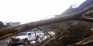 This Is Why You Should Drive A Car With A Little Balls: Tree Demolishes Nissan Leaf