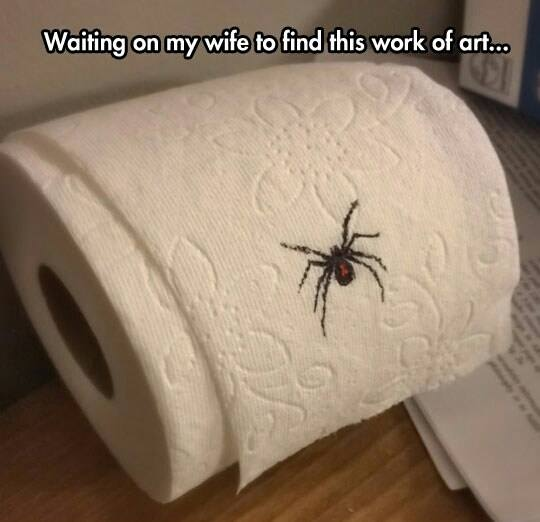 Ok, cure me please: SPIDERS! - Page 3 Spider-on-toilet-paper