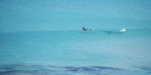Surfer Paddles For His Life To Escape Great White Attack, Photographer Captures Entire Ordeal
