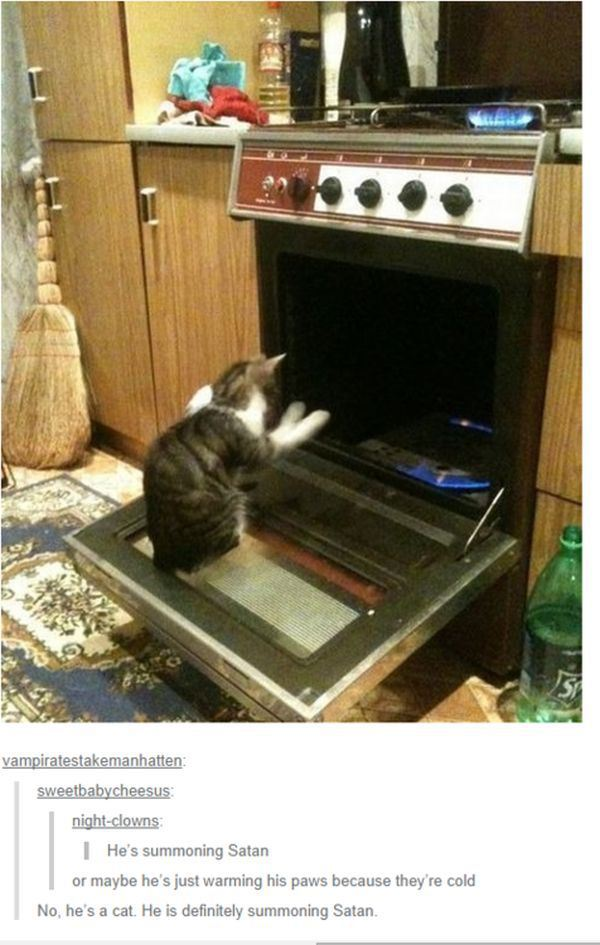 The Picture Jokes thread Tumblr-best-cat-satan