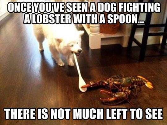 The Picture Jokes thread - Page 2 Lobster-fighting-dog-with-spoon