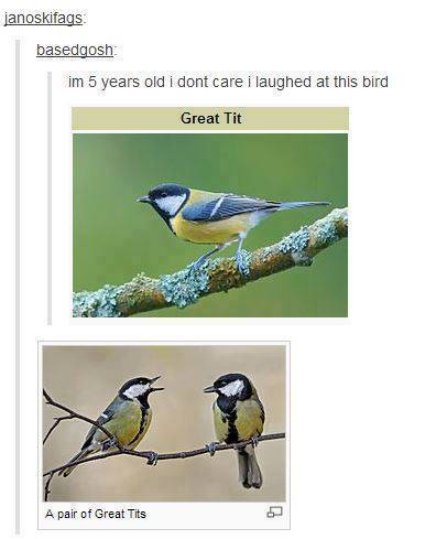 The Picture Jokes thread - Page 3 Tumblrs-greatest-hits-bird-great-tit-species