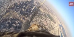 Humans Strap Camera To Bird, Drop It Off Tallest Building In The World