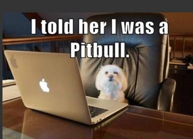 The Picture Jokes thread - Page 4 Must-see-imagery-pitbull-vs-small-dog