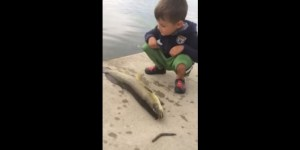 Flopping Fish Rightfully Whallops Little Kid In The Face