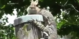 Watch A Lizard Swallow An Adorable Bunny Whole
