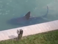 Florida Residents Find Shark Swimming In Their Backyard And YEP, No One Is Ever Swimming In That Water Again