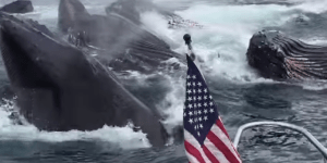 This Dude Seeing Humpback Whales Next To His Boat In Alaska Is The New 'Double Rainbow' Video
