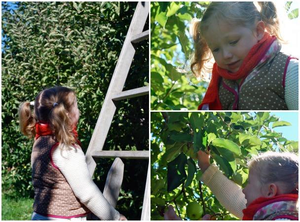 apple picking // brooklyn supper
