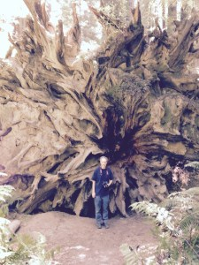 Steve Standing Next to Sequoia Root
