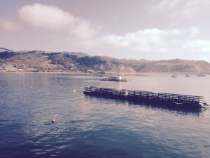 Seals lounging on barge in Avila Beach bay