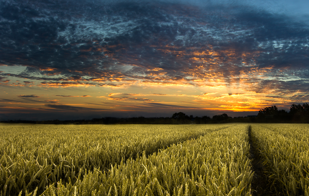 Ireland Fall Wallpaper Wheat Field Sunset Bryan Hanna Irish Landscape Photography