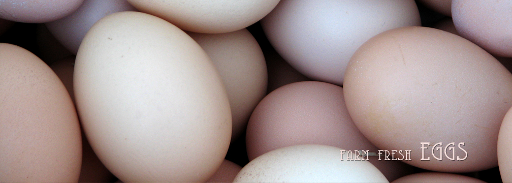 2014headerbanner-eggs