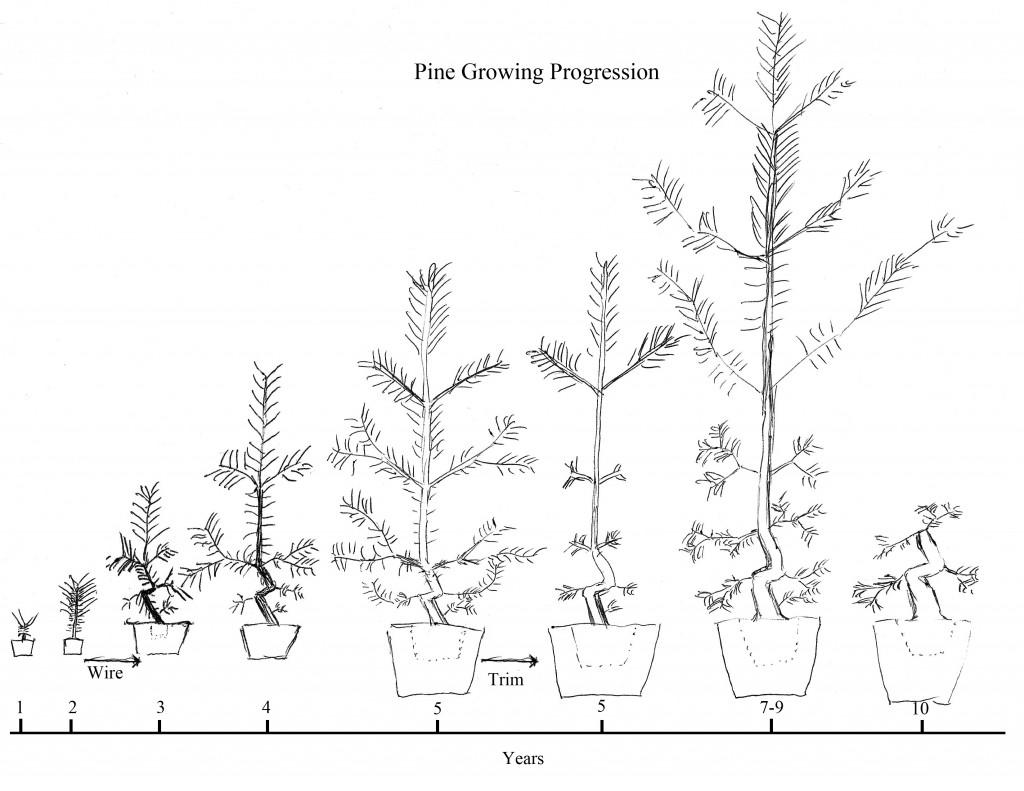 air wiring bonsai trees