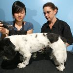 dog_cat_grooming_safety