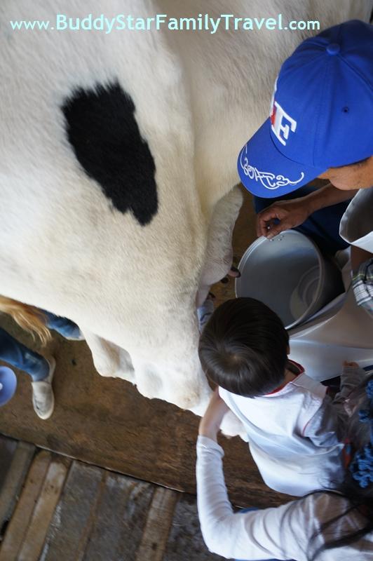 เด็ก,เที่ยว,ฟาร์มโคนม,ที่เที่ยว,เขาใหญ่,พาลูกเที่ยว