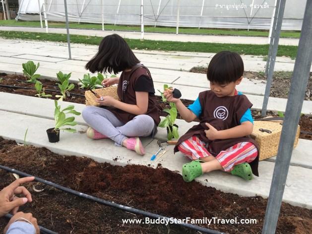 ปลูกผัก, Coro Field,โคโรฟิลด์, สวนผึ้ง, โคโรฟิว, รีวิว, เด็ก,เที่ยว,ที่เที่ยว,พาลูกเที่ยว,review