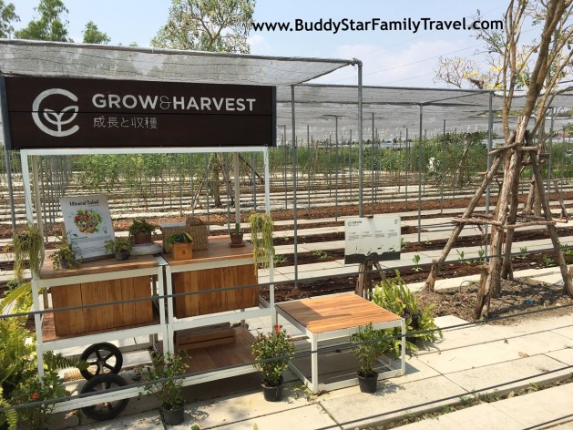 Coro Field, สวนผึ้ง, รีวิว, โคโรฟิลด์, โคโรฟิว,เด็ก,เที่ยว,ที่เที่ยว,พาลูกเที่ยว,review