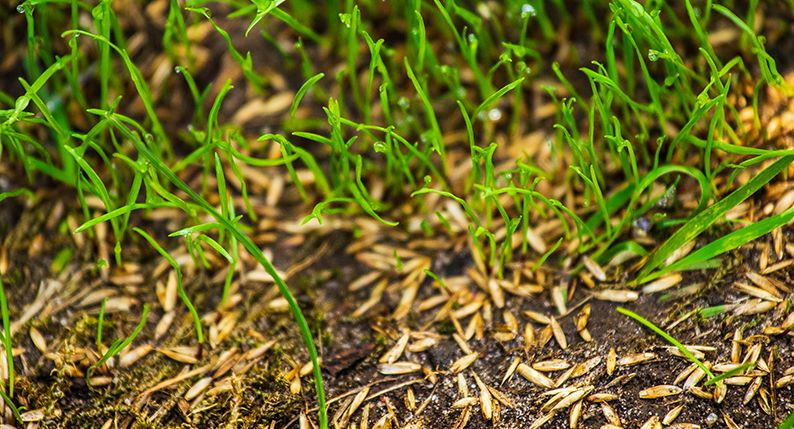 How to grow grass from seed \u2013 Simply Savvy Budget Direct