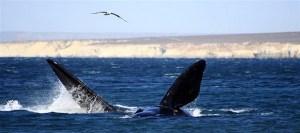7 motivos para conhecer Puerto Madryn