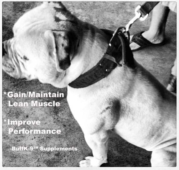 best dog muscle supplement american bulldog