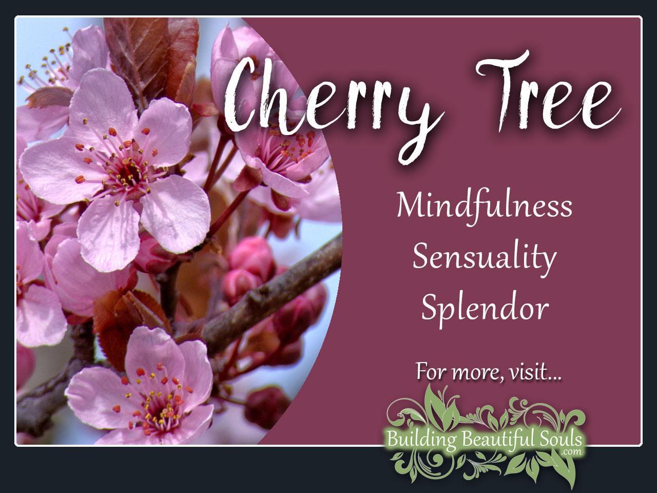Fullsize Of Stella Cherry Tree