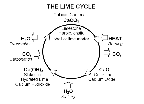 diagram of calcium cycle