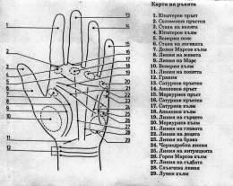 """Ръцете говорят - линиите на дланите определят т.нар. """"гледане на ръка"""""""