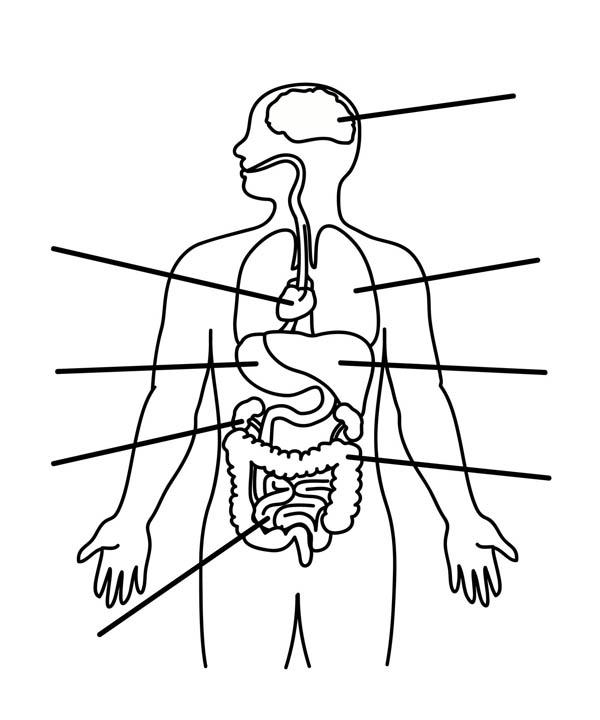 humanbodyoutlineprintable603 diagram picture