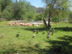 Friendly farm animals are located directly behind the property