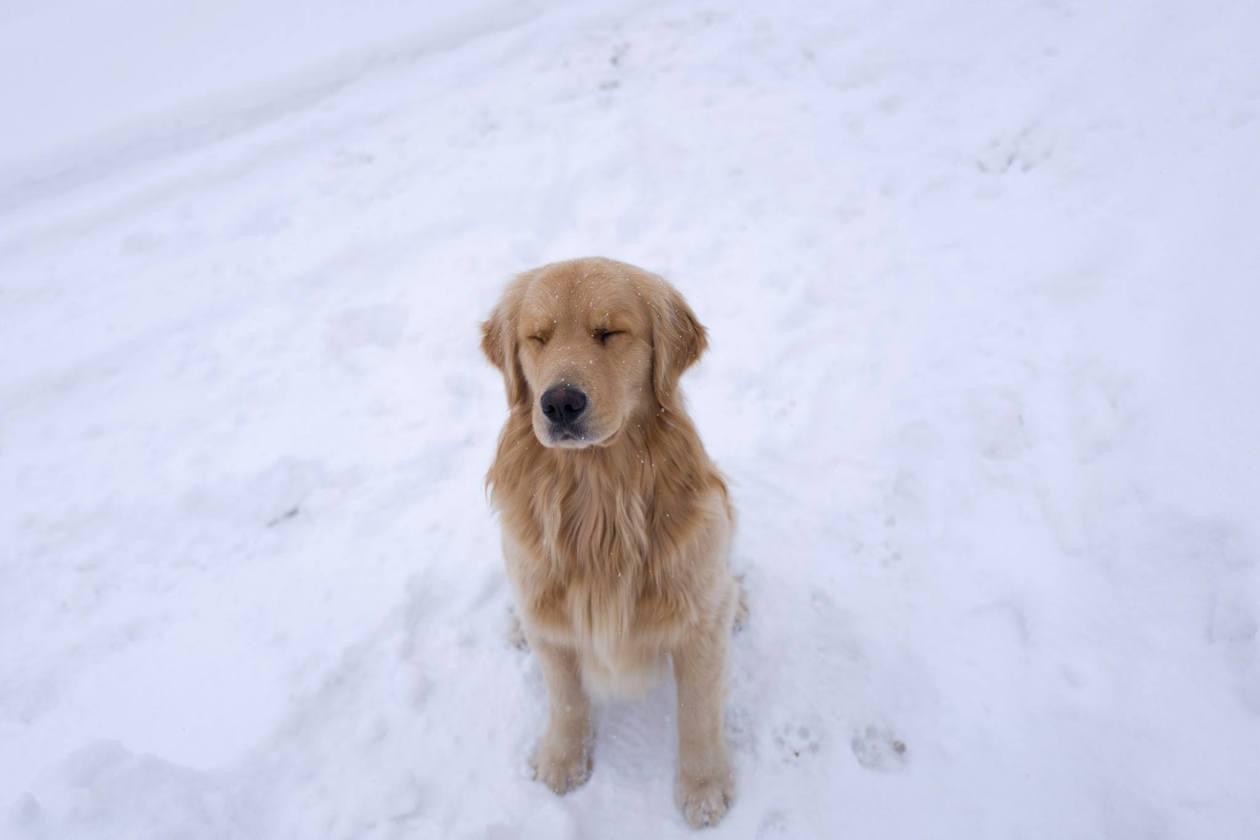 Muuta enjoying the snow. Photo credit: Chris Lim