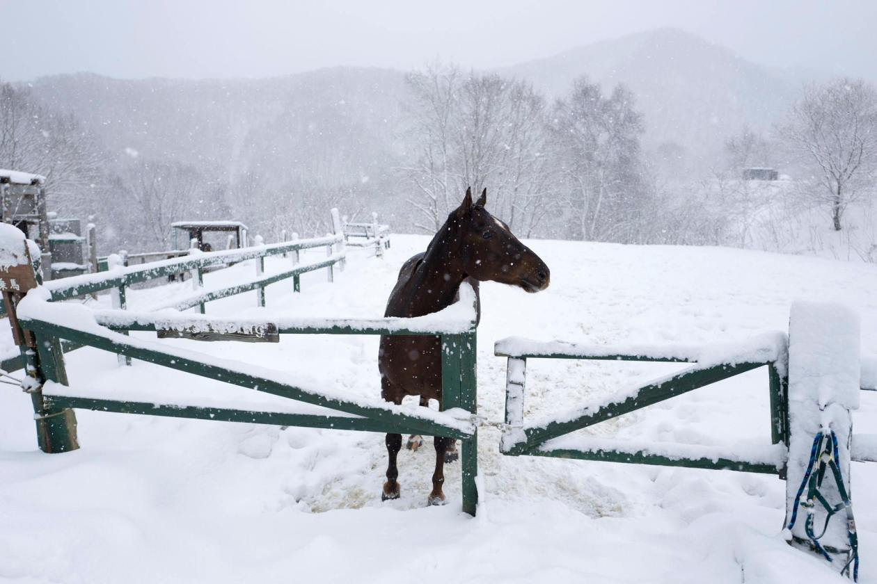 One of the horses who greeted us at the ranch. Photo credit: Chris Lim