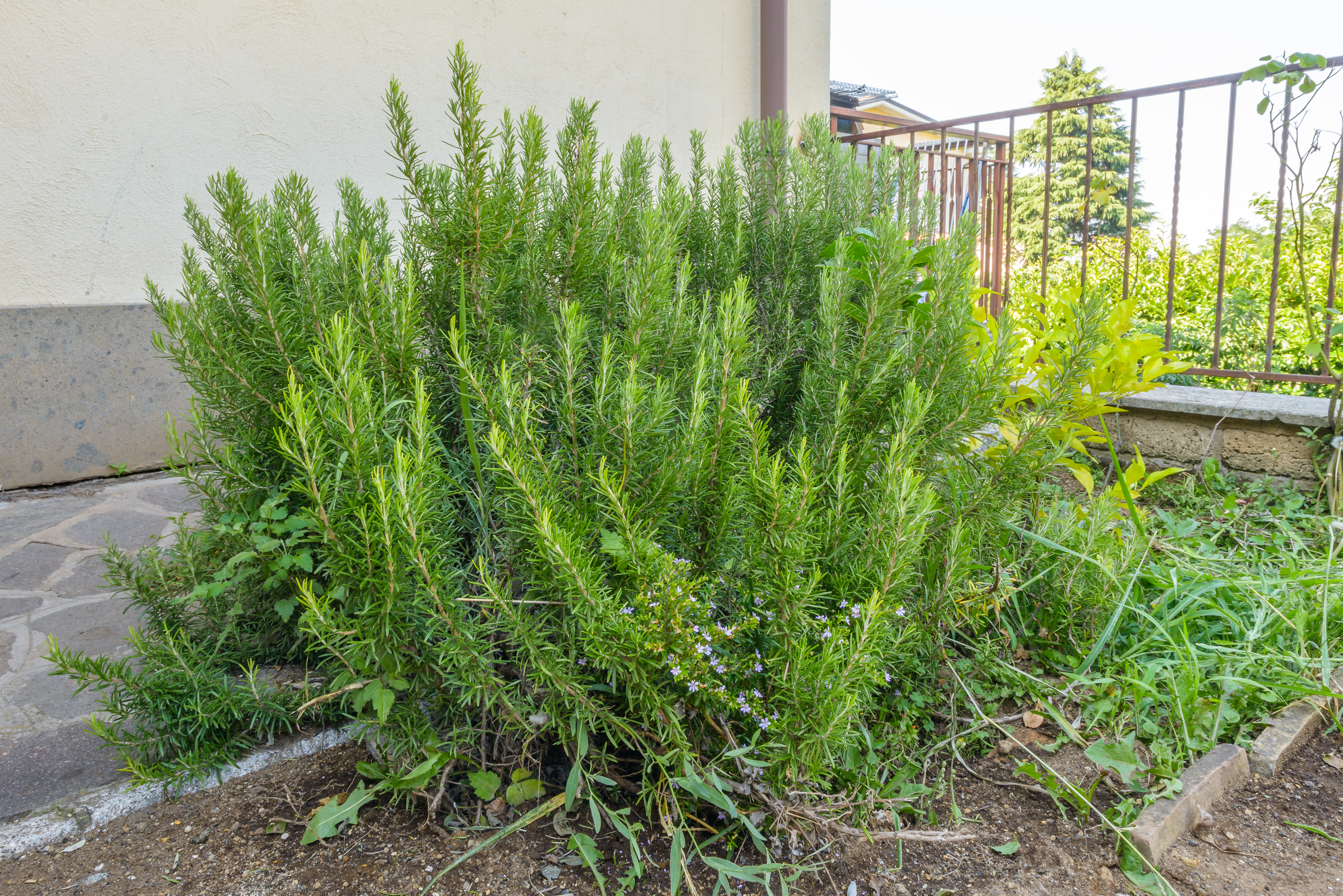 the best low maintenance plants for your garden